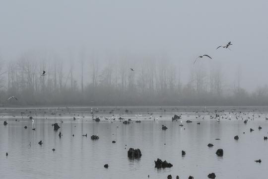 Ribogojilište Ihor park u Ornitološkom rezervatu Crna Mlaka